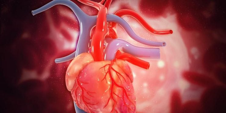L'Intellidence Artificielle cont les insufisance cardiaque