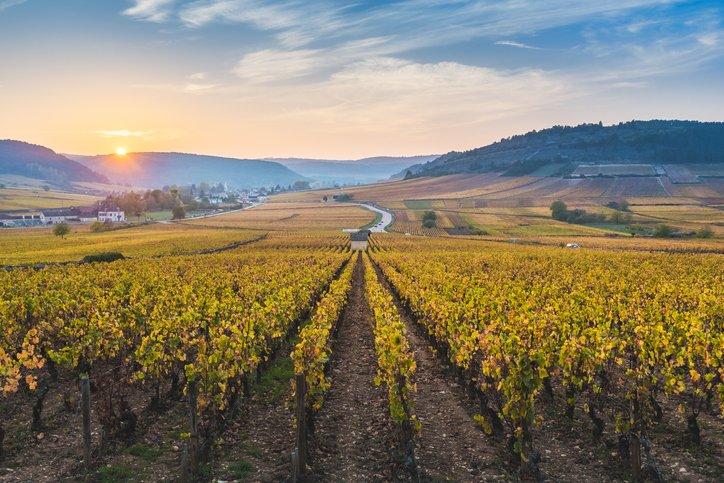 industrie viticole