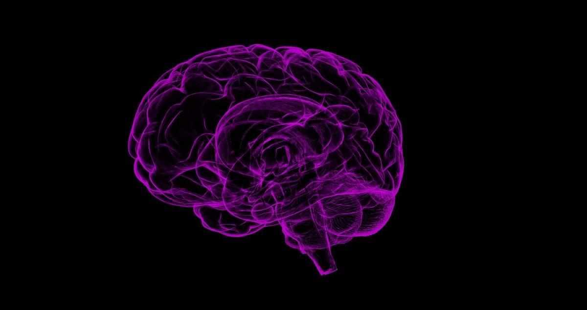 Neurosciences : Les Chercheurs Font Un Pas En Avant