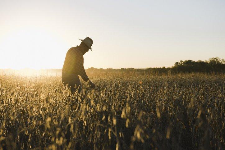 L'Agriculteur Est Un Entrepreneur Du Green New Deal | Forbes France