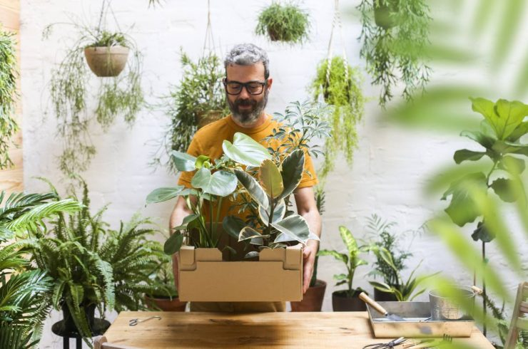 plantes intérieurs